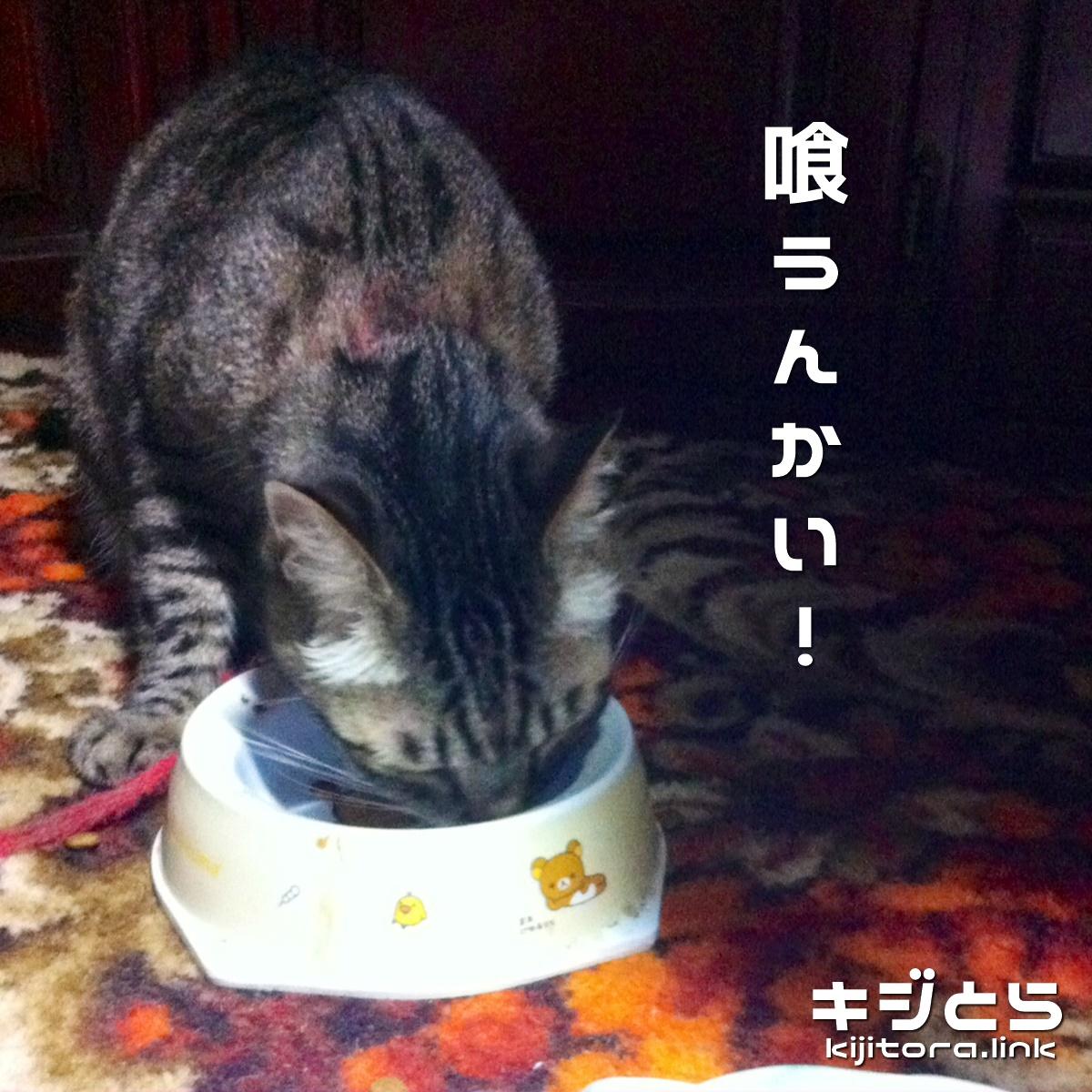 うちの猫がご飯を食べなかったワケ 2016夏 喰うんかい!
