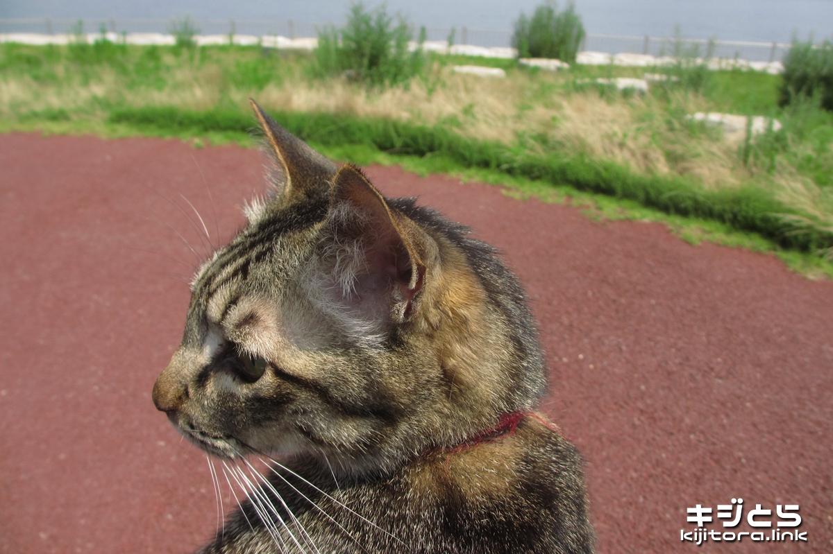 2016-07-05 猫の散歩