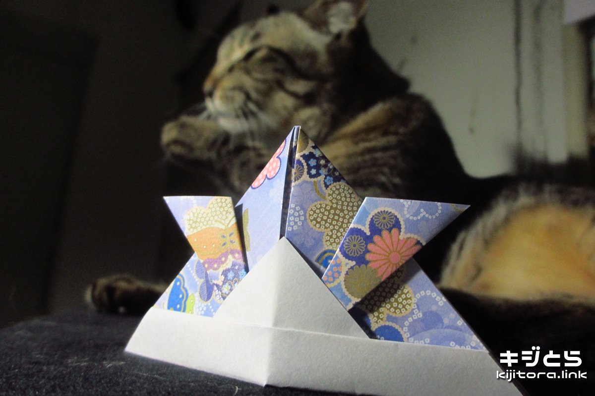 2016-07-09 カブトの折り紙と猫の記念撮影