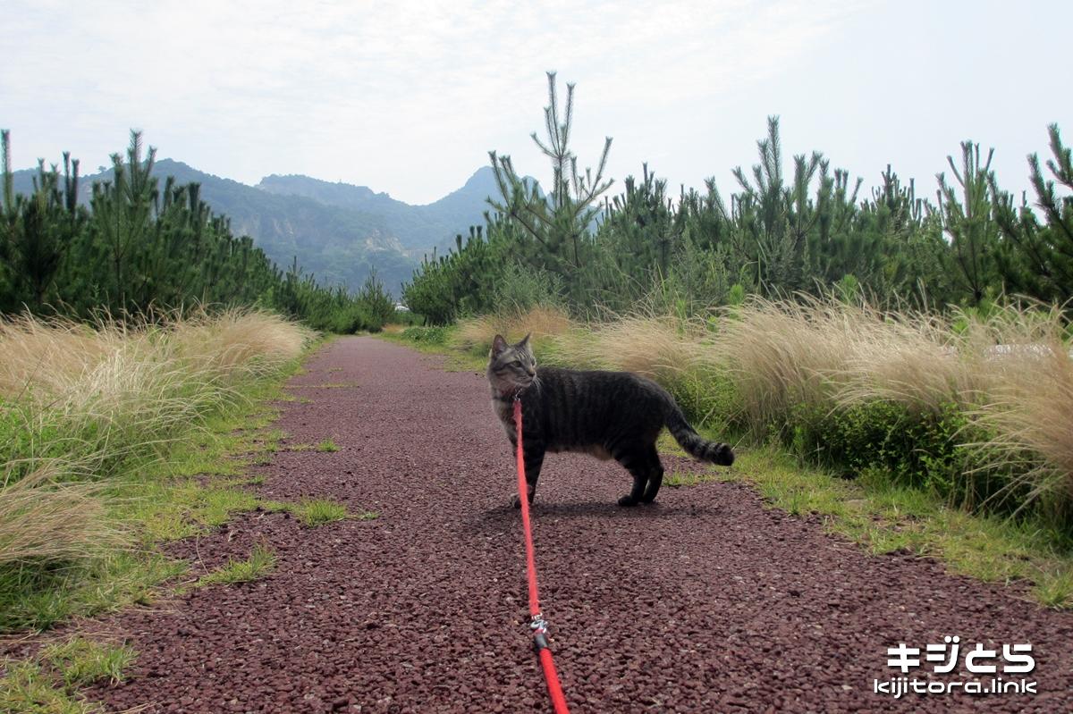 2016-07-05 猫の散歩中