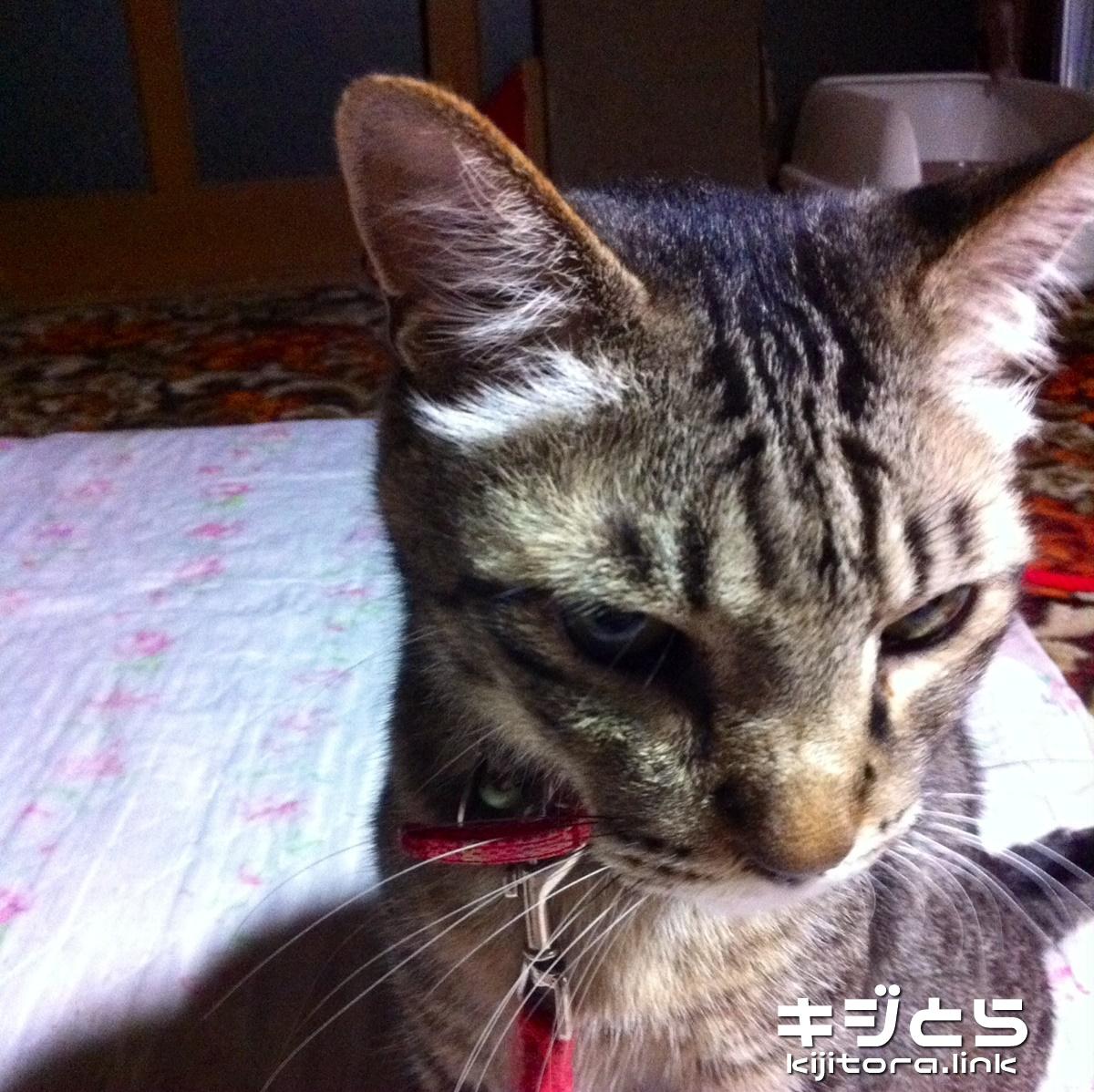 うちの猫がご飯を食べなかったワケ 2016夏 宴の終焉