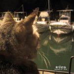 【猫雑学】ばからもんの半田清舟は猫アレルギー
