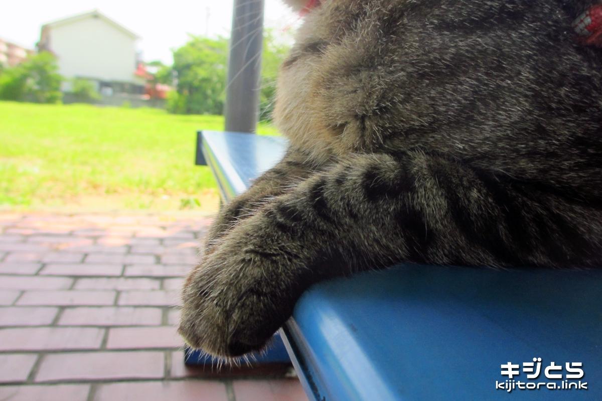 2016-07-16 公園のベンチで猫くつろぐ猫の手