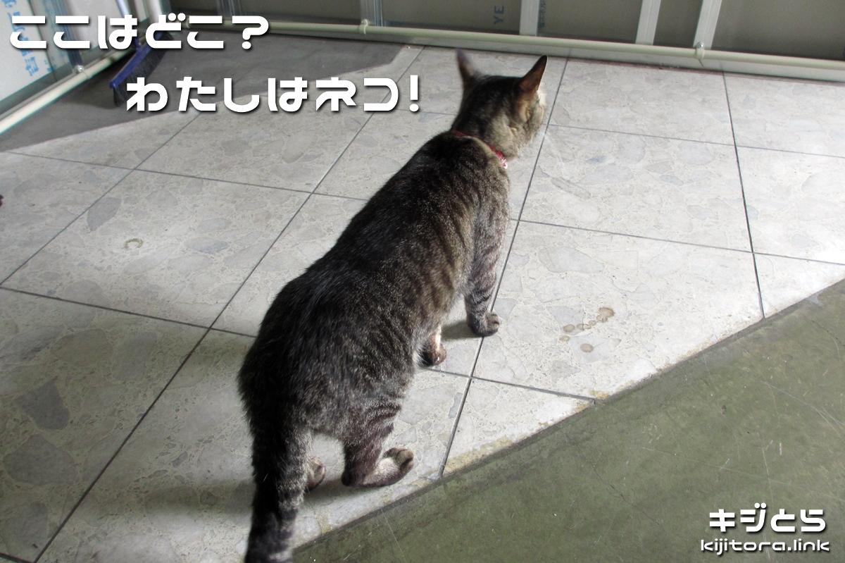 2016-07-09 落ち着かないようすの猫