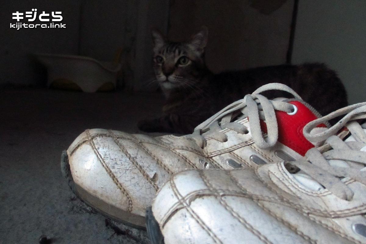 2016-07-09 猫と靴