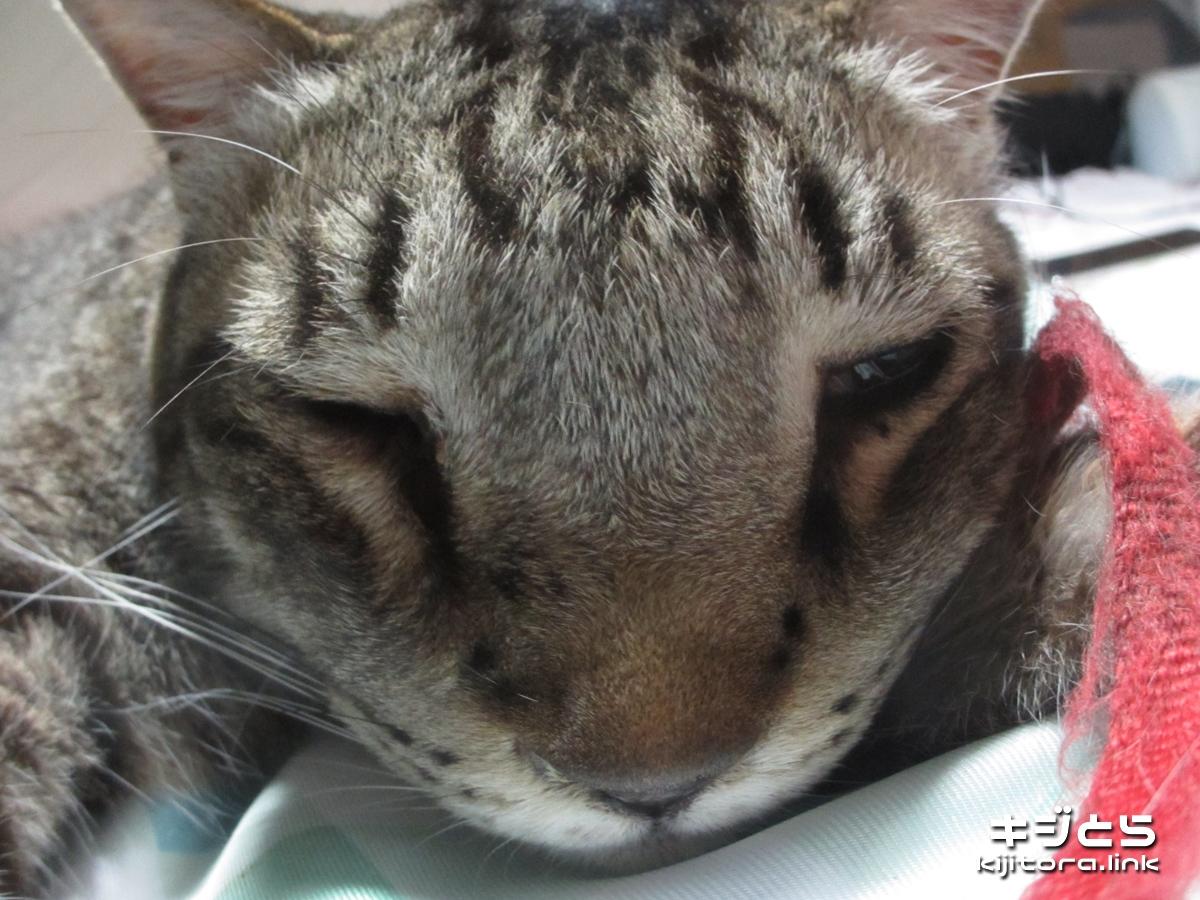 2016-07-05 魚眼モードで撮影した猫の寝顔