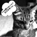 意外と簡単?「猫」と「お手」と「クリッカー」