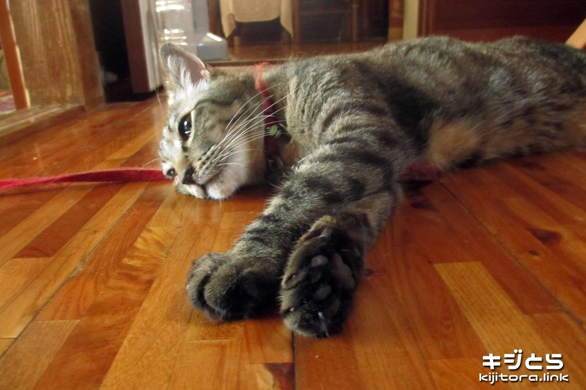 2016-07-05 お昼の猫の様子(死んでんじゃね?)