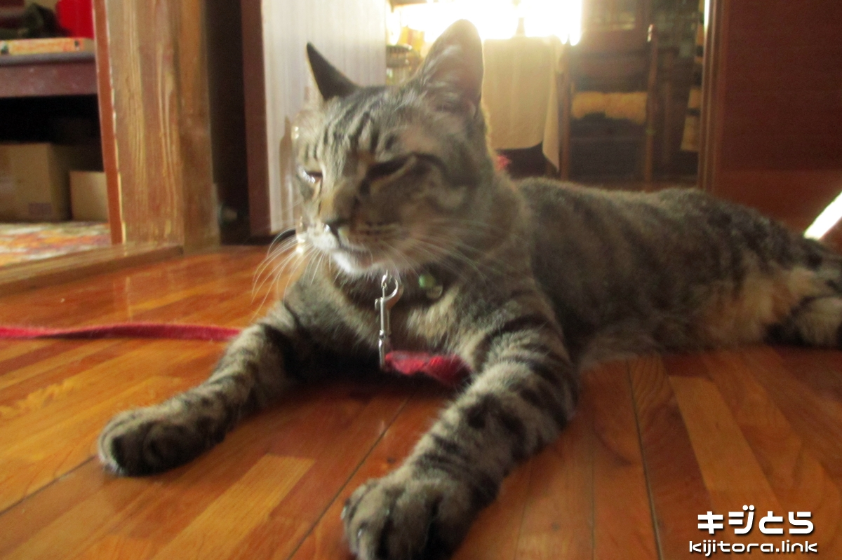 2016-07-05 お昼の猫の様子(取りあえず起きる)