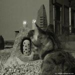 猫同伴で夜の下見へ!むれ源平石あかりロード2016