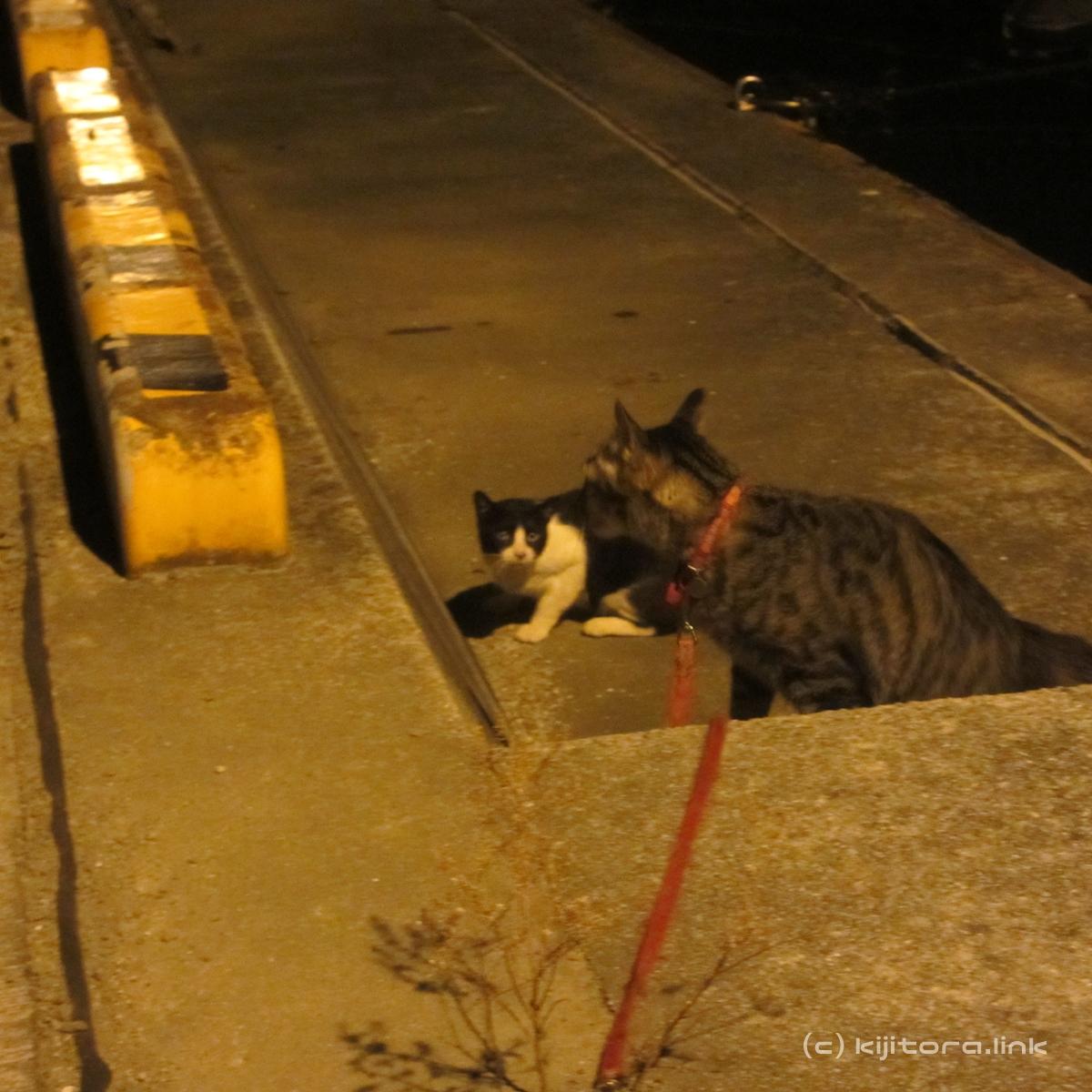 2016_08_15_猫の夜散歩(縄張り争い) (9)