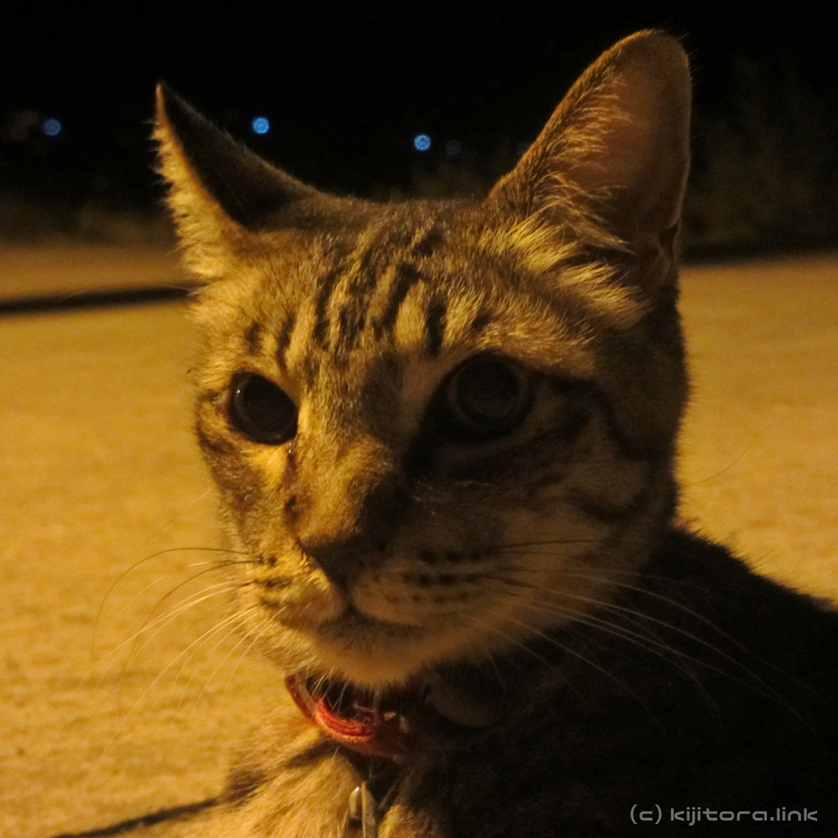 2016_08_14_猫の夜散歩 (39)