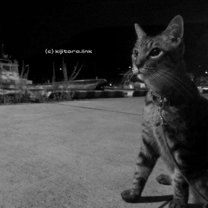 高松まつり真っ最中!でもうちらは猫散歩(写真60枚)