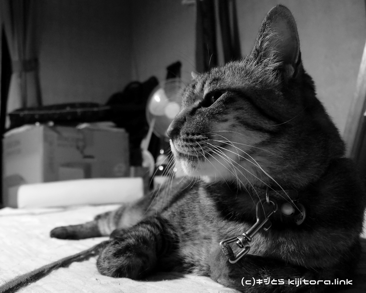 購入のご参考に!ミラーレス一眼 Nikon1 S2 で撮影した猫の写真