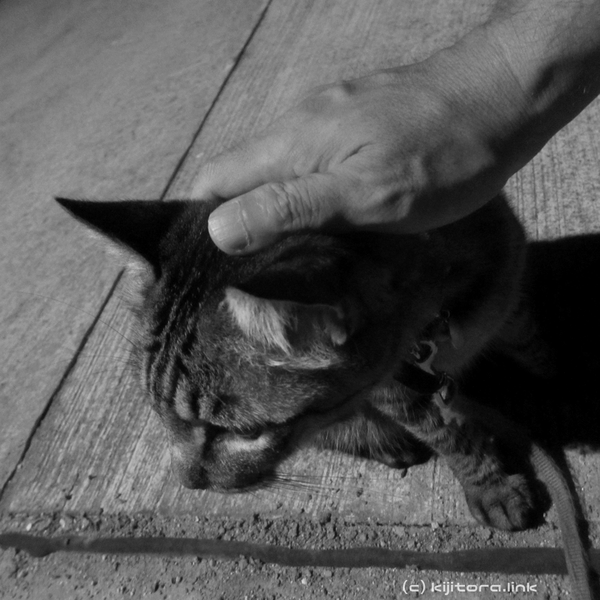 2016_08_14_猫の夜散歩 (16)