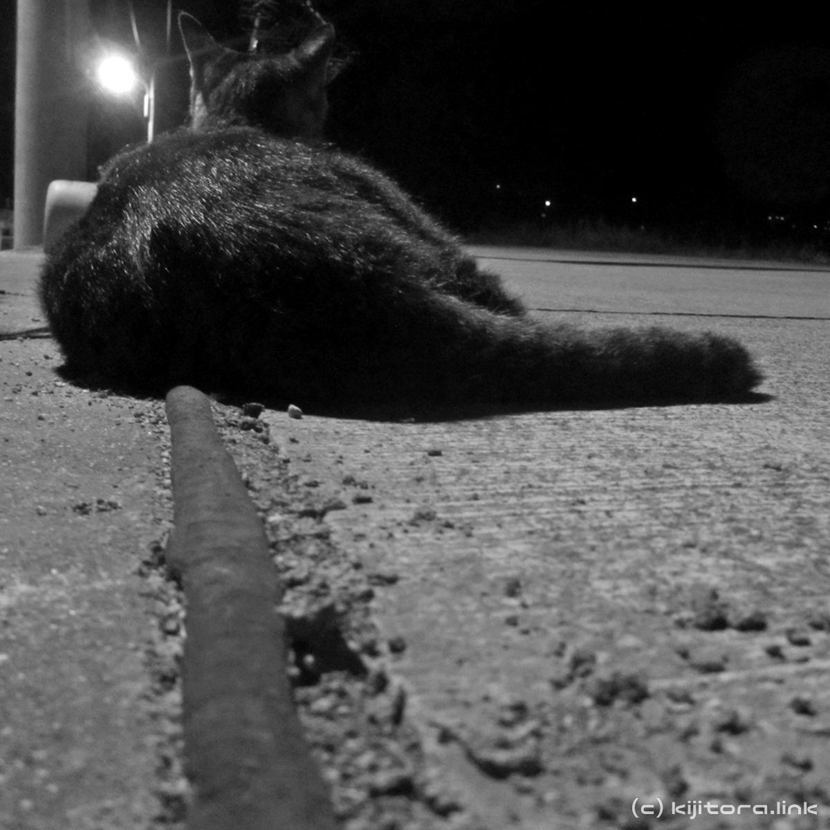 2016_08_14_猫の夜散歩 (30)