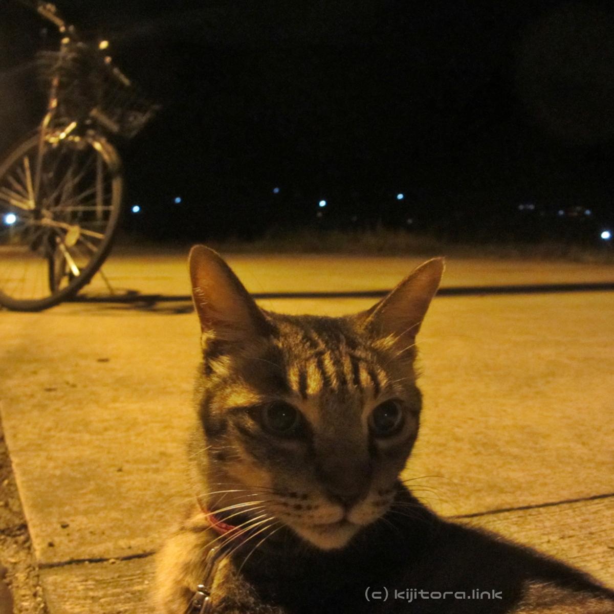 2016_08_14_猫の夜散歩 (45)