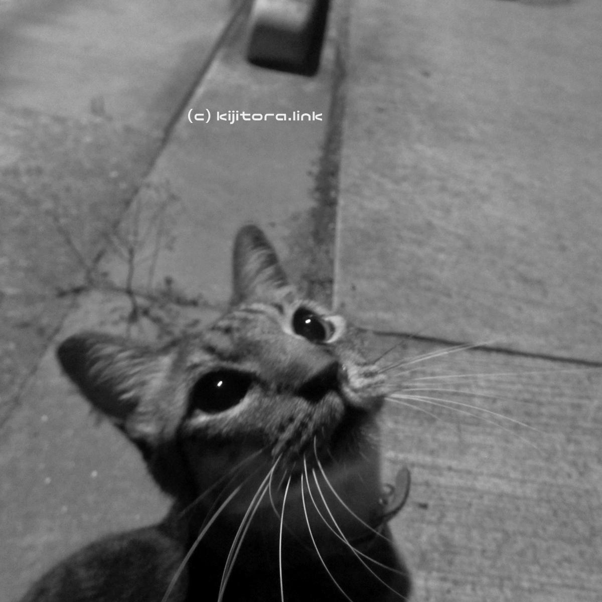 2016_08_14_猫の夜散歩 (49)