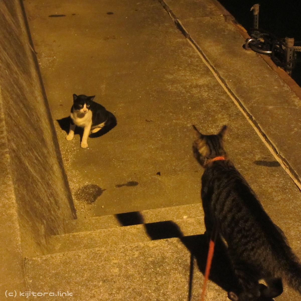 2016_08_15_猫の夜散歩(縄張り争い) (17)