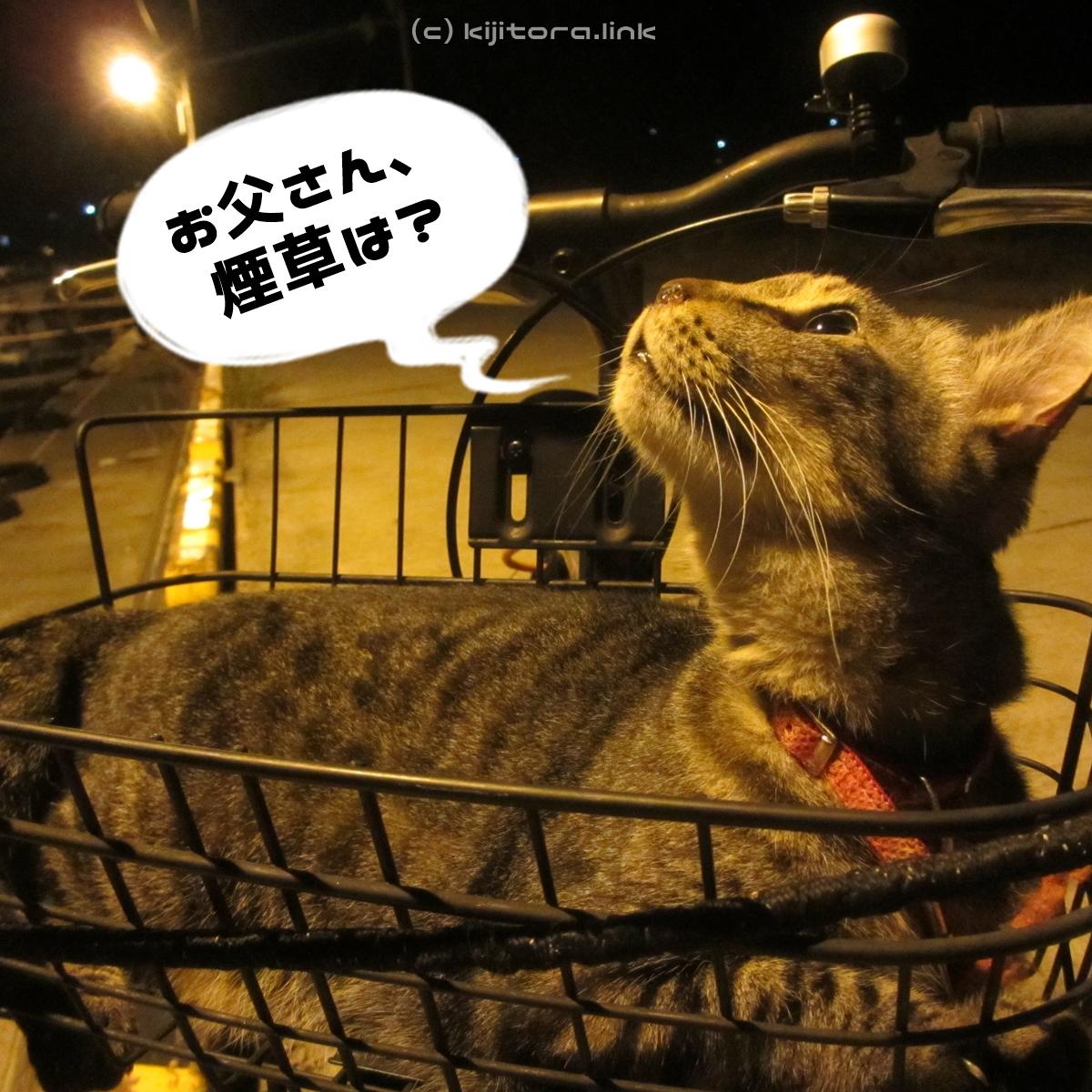 2016_08_14_猫の夜散歩 (60-1)