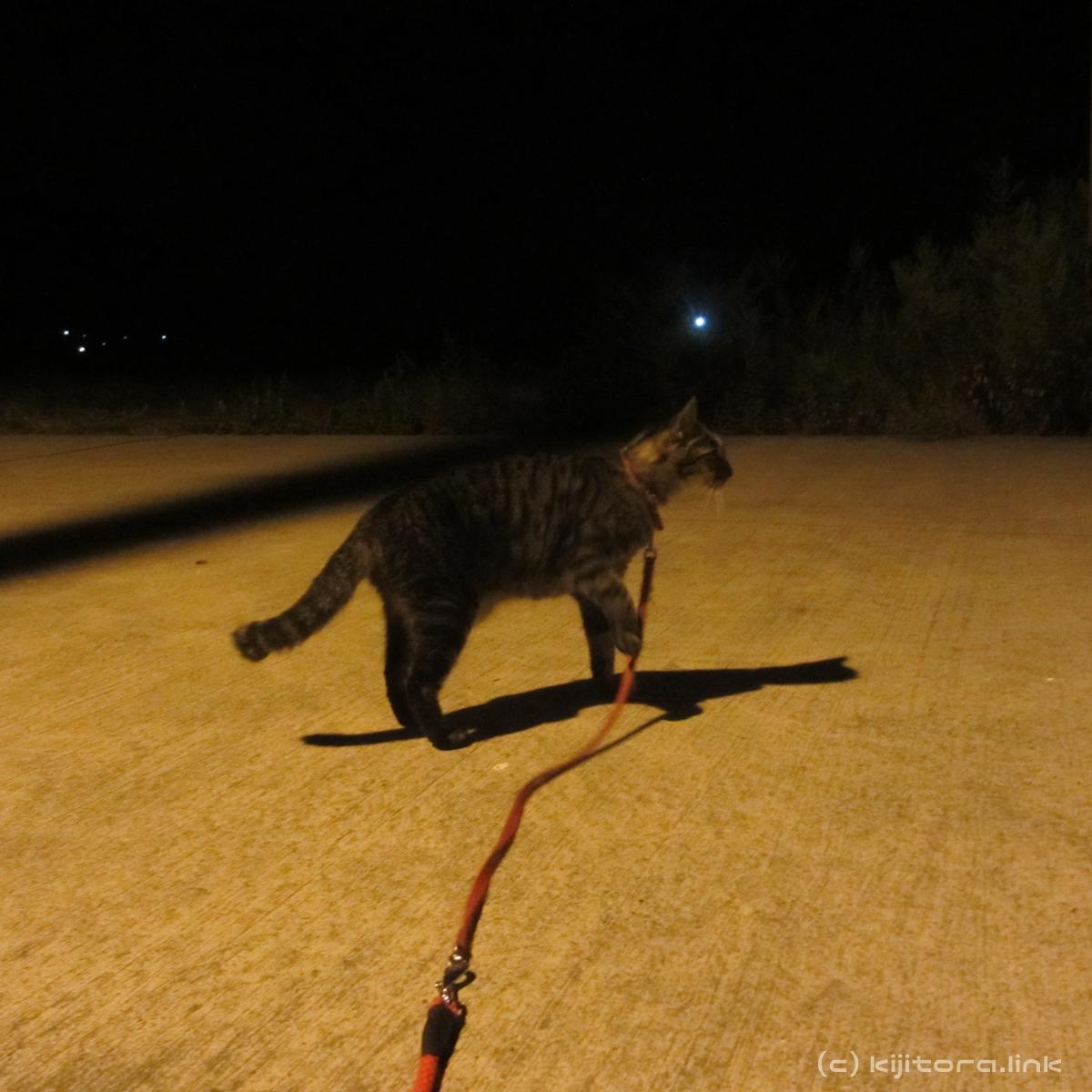2016_08_14_猫の夜散歩 (2)