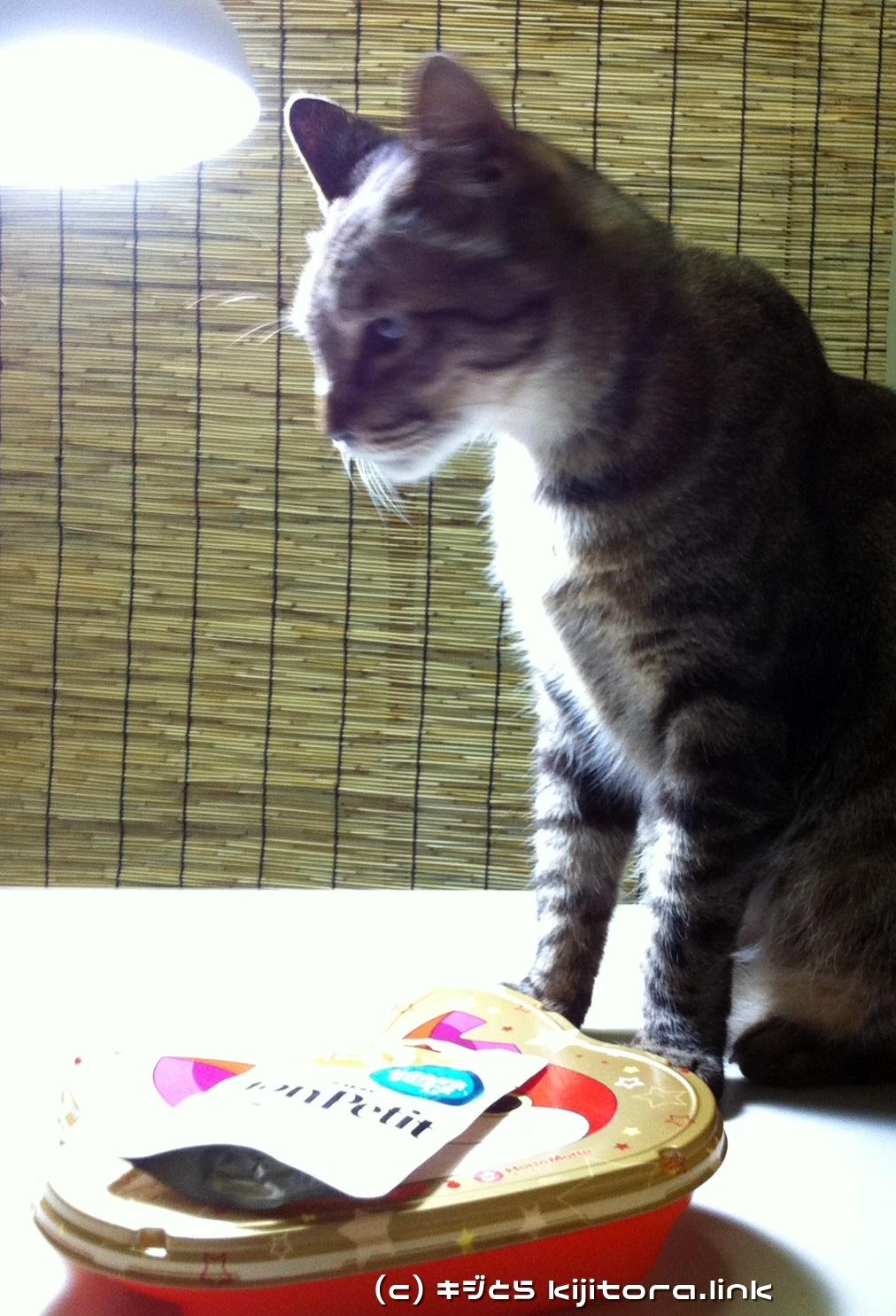今夜の猫のご飯はジバニャン弁当ニャ♪(モンプチを見つめる猫)