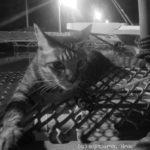 リアルポケモンGO!息子と一緒に夜の猫散歩(写真33枚)