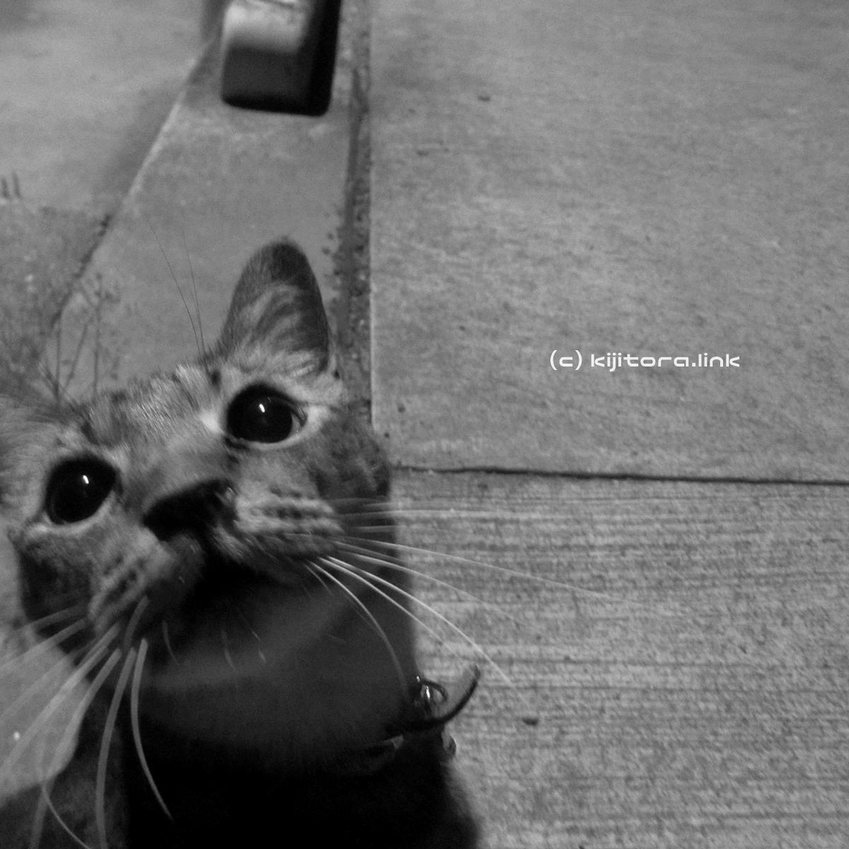 2016_08_14_猫の夜散歩 (48)