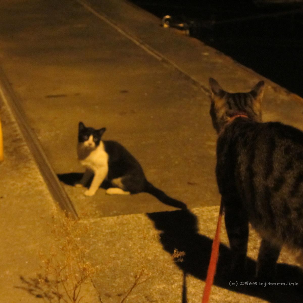 2016_08_15_猫の夜散歩(出会い)_00