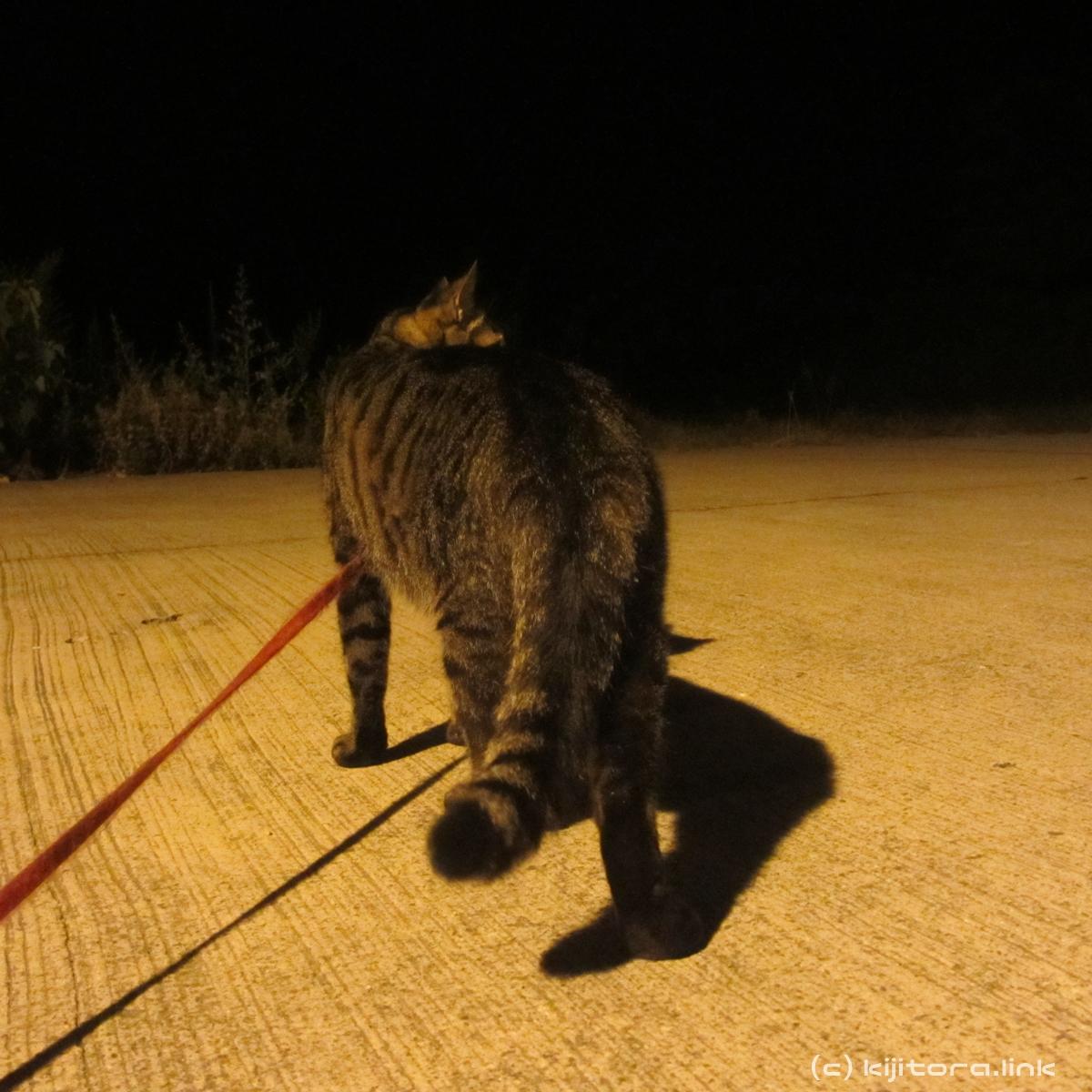 2016_08_14_猫の夜散歩 (11)