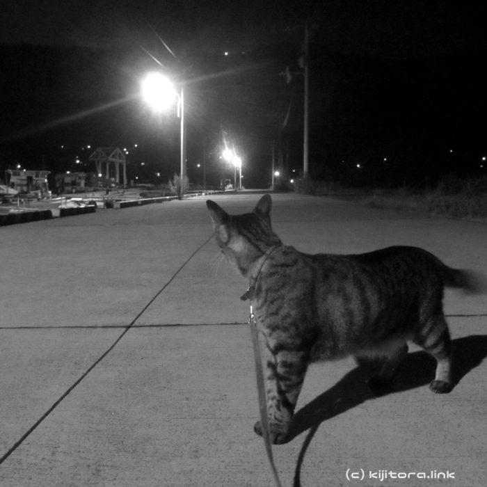 【猫用語解説】ニャルソック