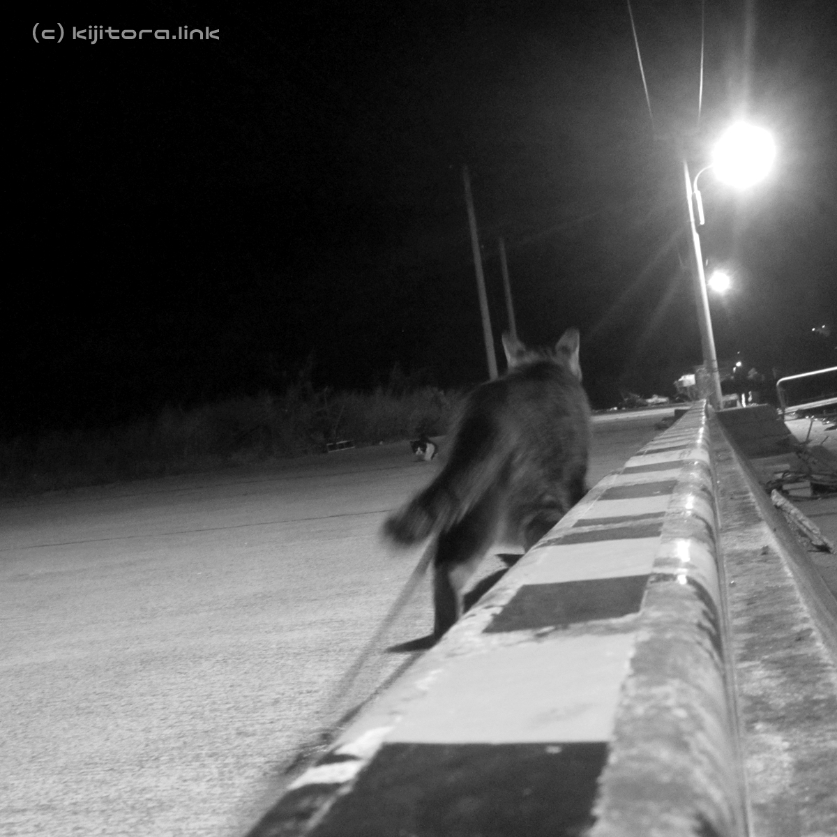 2016_08_15_猫の夜散歩(縄張り争い) (24)