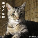 8月8日は世界猫の日!猫写真でインターネットを埋め尽くせ -World Cat Day-