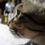 失踪から3年後、5歳の少女と再会を果たした猫