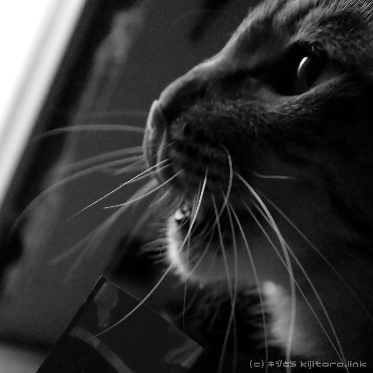 玄関のドアを開けると、そこは猫まみれだった!なYouTube動画