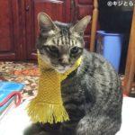黄色い手編みの猫マフラー試着レビュー