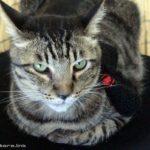 猫モミモミ、股間はやめなはれな話