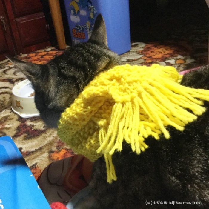 何故そうなった?猫とマフラーと毛糸玉