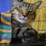 ベタですが…ノートパソコンを占領する猫の写真集