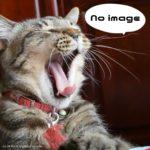 【猫雑学】磯野家のペット、タマを拾って来たのはワカメ