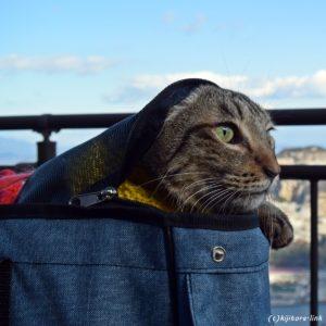 震災時、猫を脱走から守るための3つの防災グッズ