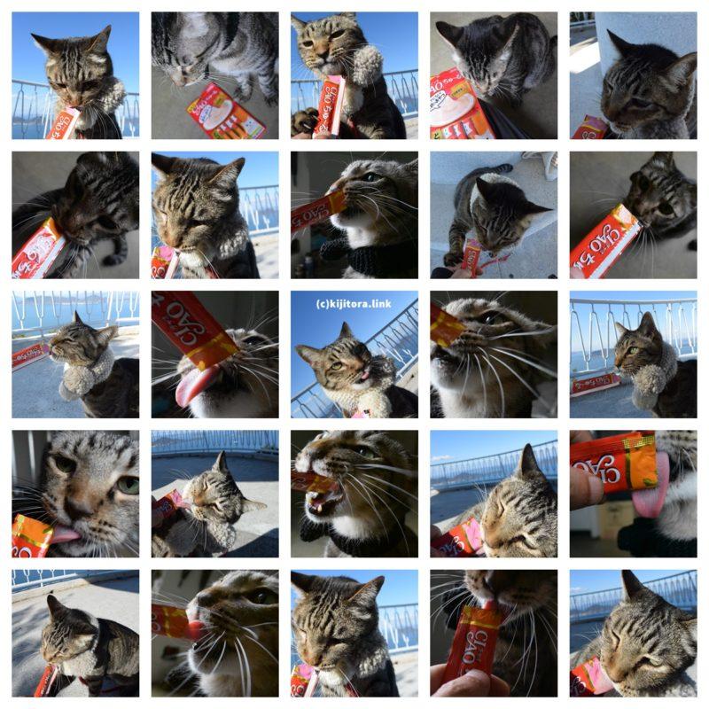 ちゅーるを食べるキジトラ猫の写真25カット