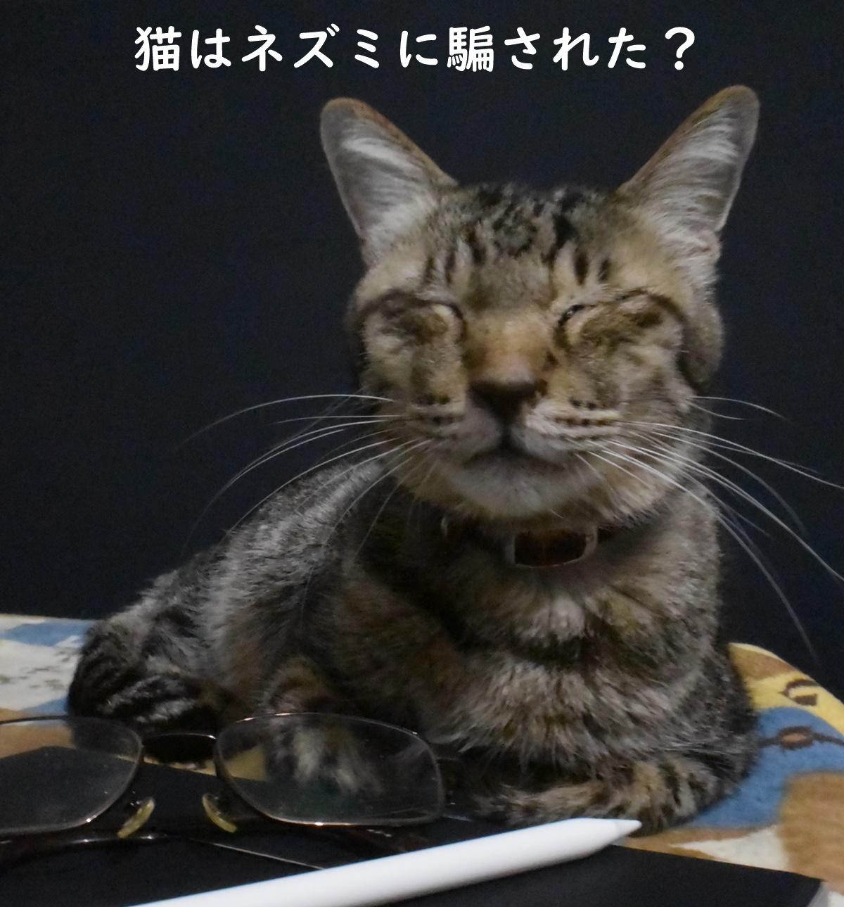 猫はネズミに騙された?