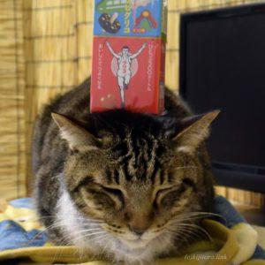 猫とグリコ
