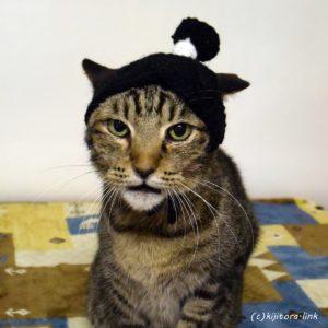 ちょんまげ猫