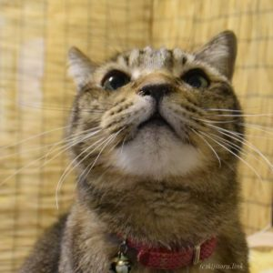 【猫雑学】チャルメラおじさんと一緒にいる黒猫の名前は?