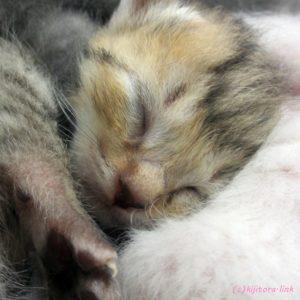 【保護ネコ】猫を飼うために必要なもの【迷いねこ】