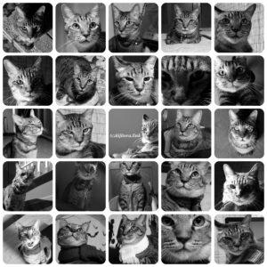 キジトラ猫の顔写真を並べてみたら・・・。