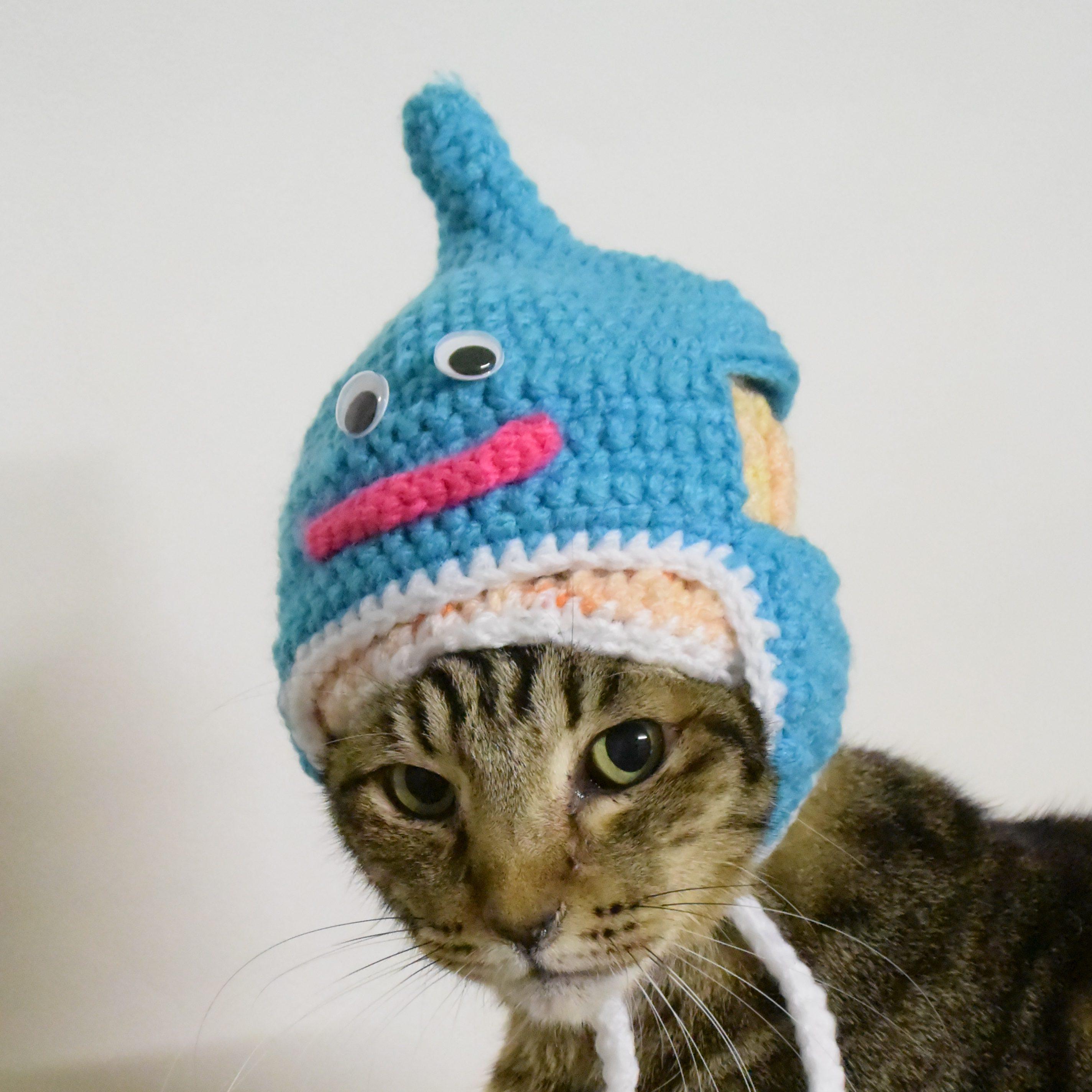 可愛いキジトラ猫の写真