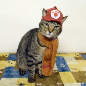 猫のチャルメラおじさんコスプレ